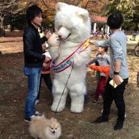 Tokyo with Kids- Yoyogi Park