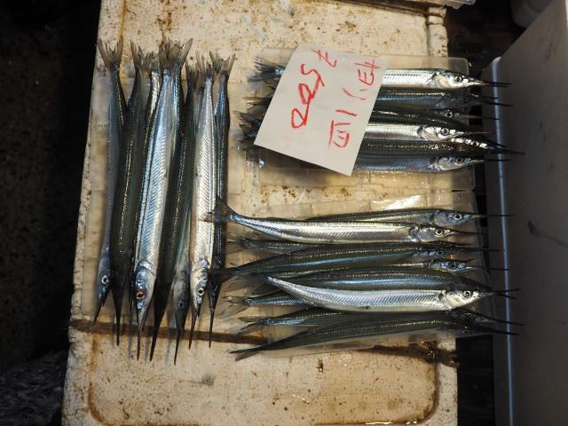 Marlin at Tsukiji Fish Market